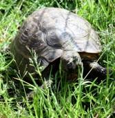 Czy to żółw Makary?