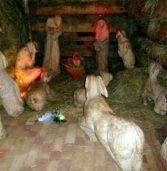 Kamieńska Szopka Bożonarodzeniowa niczym żywa…
