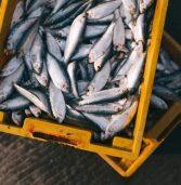 Bezpieczne ryby – dowiedz się, dlaczego należy włączyć je do jadłospisu niemowlęcia