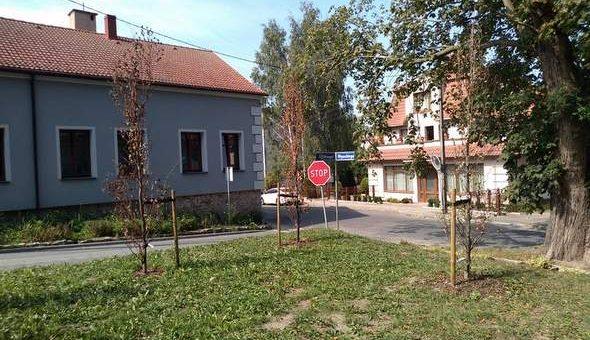 Usychają nowo posadzone drzew w Parku Jana Pawła II !!!