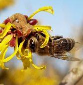 8 sierpnia to Wielki Dzień Pszczół. Warto docenić ich rolę w przyrodzie